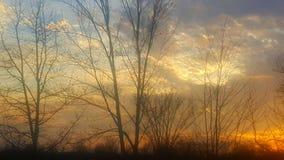 Fördunklar blå himmel för solnedgångar trädeftermiddag Royaltyfri Fotografi