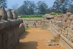 Förebilder av Nandi på kusttemplet i Mahabalipuram, Indien Arkivfoton