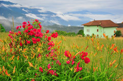förenad färgblommaträdgård Fotografering för Bildbyråer