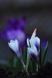 förenad färgblommaträdgård royaltyfria bilder