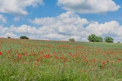 Förenade kungariket - Clare Royaltyfria Bilder