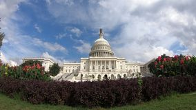 Förenta staternahuvudbyggnad, bred vinkel för kongress med lövverk - bred vinkel för Washington DC royaltyfri bild
