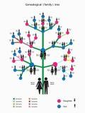 Föreställa av det genealogiska stamträd royaltyfri illustrationer