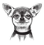 Förfölja chihuahuaen. Illustration Royaltyfria Foton