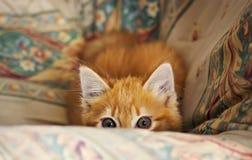 Förfölja den lilla kattungen Arkivbilder