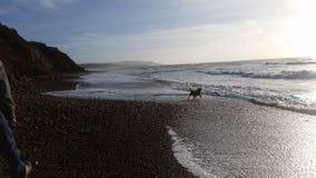 Förfölja i havet Fotografering för Bildbyråer