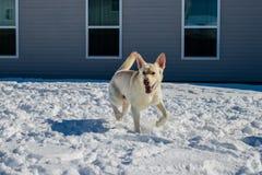 Förfölja i snowen arkivfoto