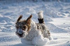 Förfölja i snowen arkivbild