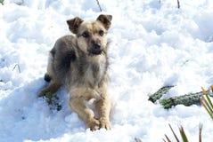 Förfölja i snowen Fotografering för Bildbyråer
