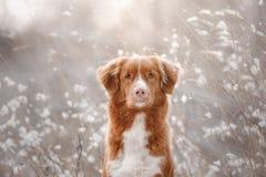 Förfölja i snowen hund little profilflod royaltyfri bild