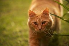 Förfölja kattframsidan royaltyfria foton