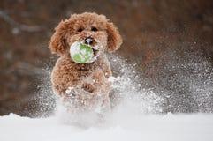 Förfölja att leka i snowen Arkivfoton