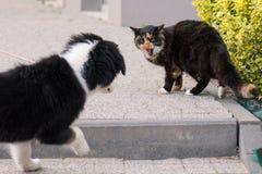 Förfölja och katten arkivfoton