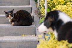 Förfölja och katten arkivbild