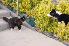 Förfölja och katten royaltyfria foton