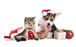Förfölja och katten arkivbilder