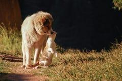 Förfölja och katten Royaltyfri Bild