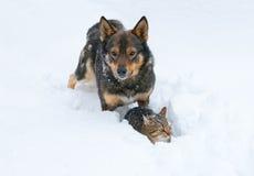 Förfölja och katten i snow Royaltyfri Foto