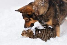 Förfölja och katten i snow Arkivbild