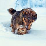 Förfölja och katten i snow Arkivfoton