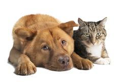 Förfölja och katten tillsammans Royaltyfri Foto