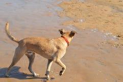 Förfölja på stranden Arkivfoton