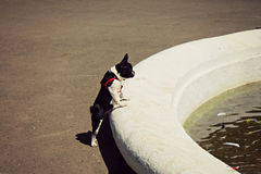 Förfölja törstad springbrunn Vatten ukraine Arkivfoton