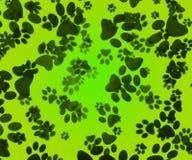 Förfölja tafsar grön bakgrund Arkivfoton