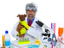 Förföljer den enfaldiga veterinär- manen för den galna nerdforskare med på labbet fotografering för bildbyråer