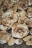 Förfalla torkade Camellia Flowers Arkivfoto