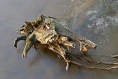 förfalla treevatten Fotografering för Bildbyråer