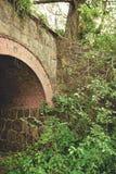 Förfallen bro i grön vildmark royaltyfria bilder