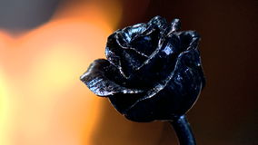 Förfalska rosen, blomma, för att göra glödhett symbolet, tecken stock video