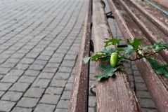 Förfalskade trä parkerar bänken, den bruna bänken med falska metallben, en kvist med en ekollon, trottoartegelplattor arkivbild