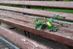 Förfalskade trä parkerar bänken, den bruna bänken med falska metallben, en kvist med en ekollon, trottoartegelplattor royaltyfri bild
