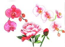 författare blommar set vattenfärg för I-målningsbild royaltyfri illustrationer
