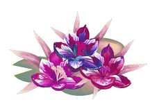 författare blommar vattenfärg för I-målningsbild Arkivfoton