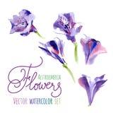 författare blommar vattenfärg för I-målningsbild