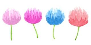 författare blommar vattenfärg för I-målningsbild hand-teckning Royaltyfri Foto