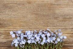 Förgätmigejen blommar på träbakgrund Fotografering för Bildbyråer