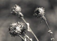 Förgångna Mini Flowers Arkivfoton