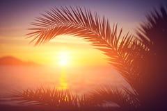 Förgrena sig av en palmträd Arkivfoto