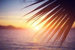 Förgrena sig av en palmträd Royaltyfria Bilder