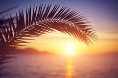 Förgrena sig av en palmträd Fotografering för Bildbyråer
