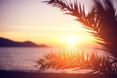 Förgrena sig av en palmträd Royaltyfri Fotografi