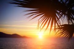 Förgrena sig av en palmträd Royaltyfri Foto