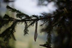 Förgrena sig av en Tree Royaltyfria Bilder