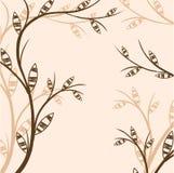 Förgrena sig av en växt Arkivfoton