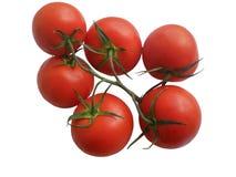 Förgrena sig av mogna tomater Royaltyfri Fotografi