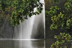 Förgrena sig av Oaktreen som inramar en springbrunn Arkivbild